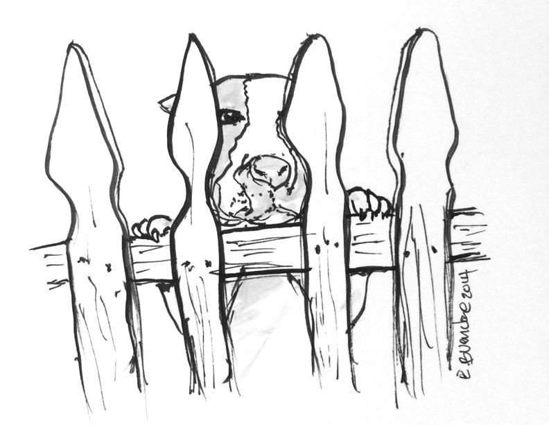 dog_fence2